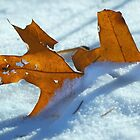 First Snow by Laurie Minor