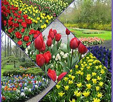 Tulips and Hyacinths - Keukenhof Collage by Kathryn Jones