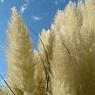 PAMPUS GRASS by PhotogeniquE IPA