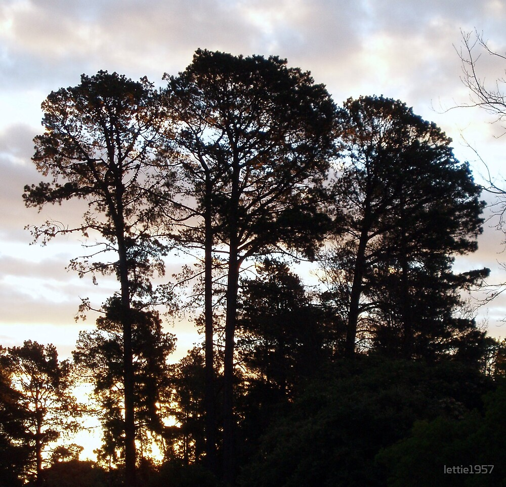 Trees silhouette in sunset.  Colourful sky  by lettie1957