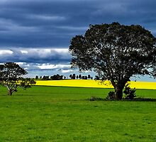 """""""Green & Gold"""" by Phil Thomson IPA"""
