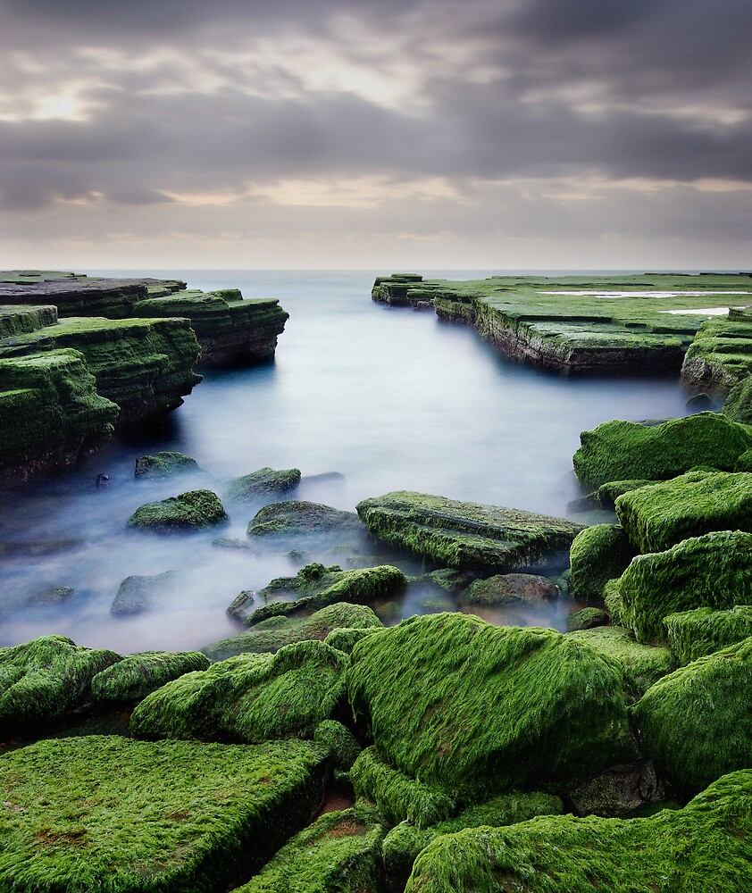 Green Weed Cove by Brent Pearson