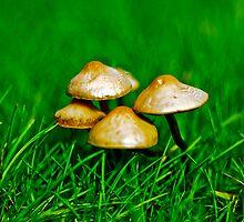 Wild mushroom by Elvar Eyberg Halldórsson