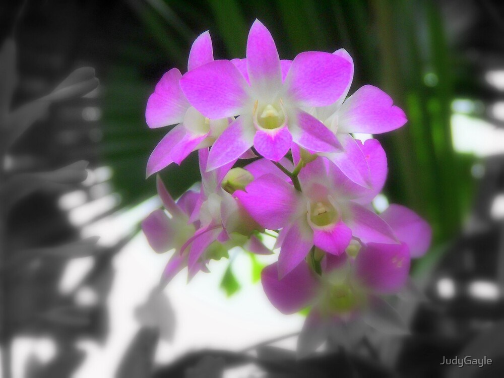 Orchids in Bloom by Judy Gayle Waller