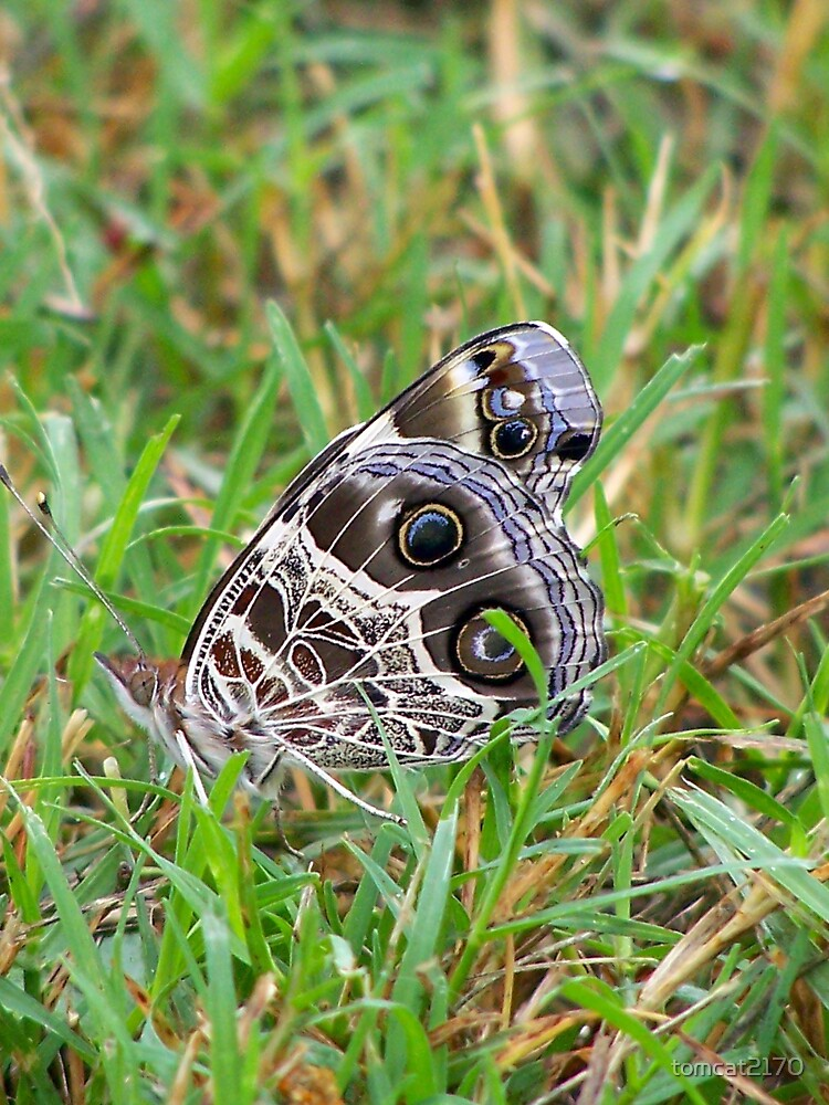 butterfly in the grass by tomcat2170