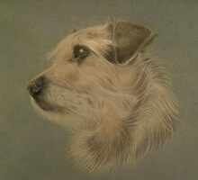 Rosie The rough haired terrier by Karie-Ann Cooper