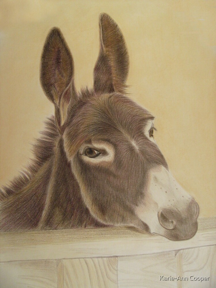 The Wonky Donkey by Karie-Ann Cooper