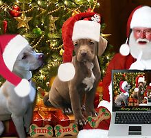 ☆ ★PRECIOUS MIRACLE ON PAWS- APBT- (DOGS) WITH SANTA -PICTURE/CARD HO HO HO RUFF RUFF-JUST FINISHED MAKING BARKING DOG VIDEO TO THE TUNE OF JINGLE BELLS ENJOY HUGS ☆ ★ by ✿✿ Bonita ✿✿ ђєℓℓσ