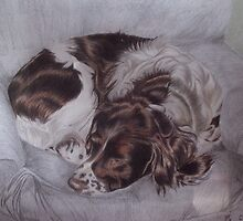 Zac the Springer Spaniel by Karie-Ann Cooper