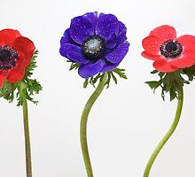 3 flowers by Claudia Reitmeier