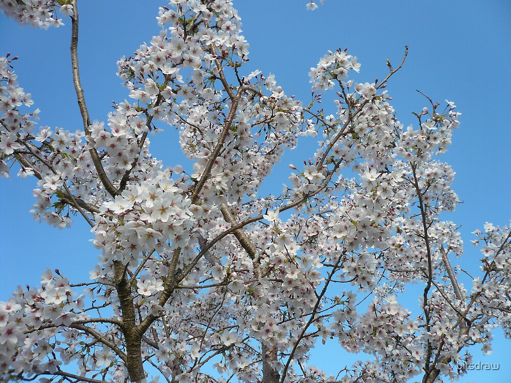 spring by bitsdraw