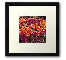 Tulips, Madison Square Park Framed Print