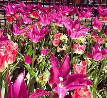Flower Garden, Madison Square Park by Lagoldberg28