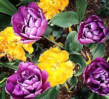 Purple & Yellow Flowers by Lagoldberg28
