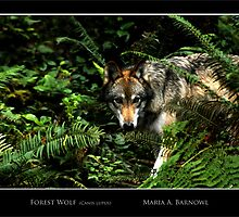 Forest Wolf - Cool Stuff by Maria A. Barnowl