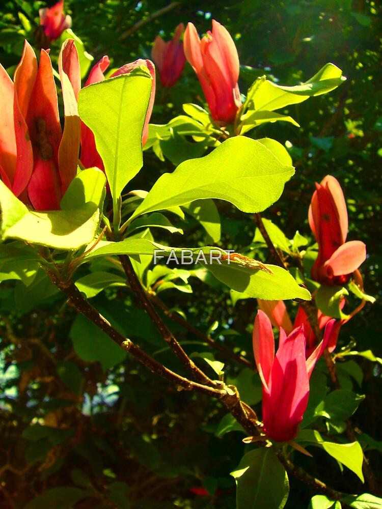 Port Wine Magnolia by FABART