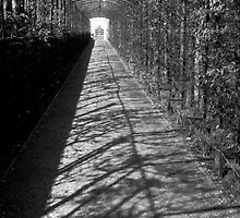 """""""Queen Mary's Bower"""" (Hampton Court) Jenny Meehan by jenny meehan"""