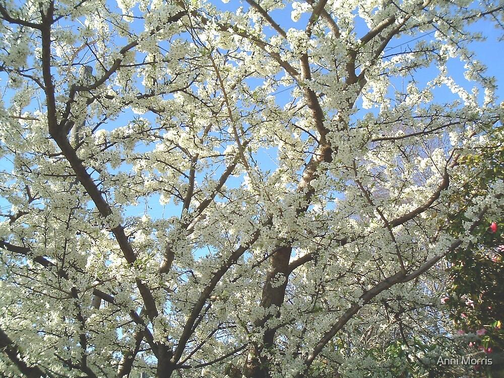 Confetti Spring by Anni Morris