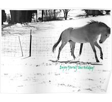 Paso Fino Grey White Horse Running in The Snow Poster
