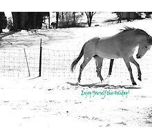 Paso Fino Grey White Horse Running in The Snow Photographic Print