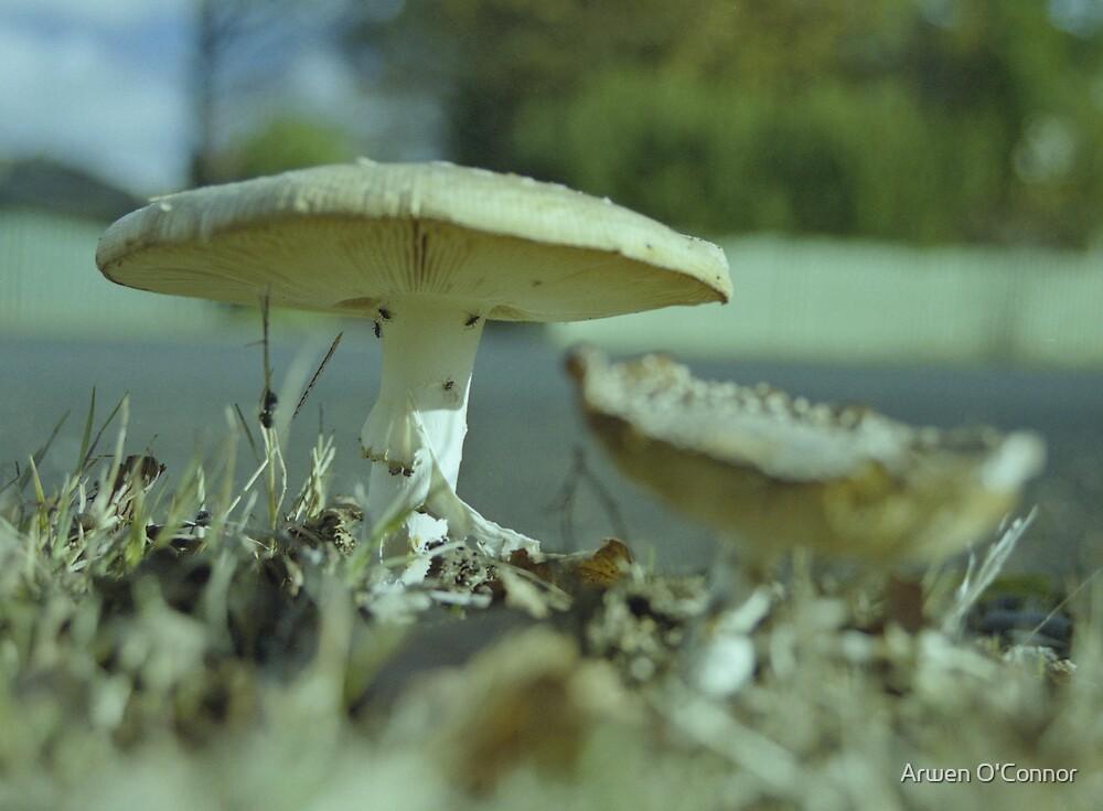 Mushrooms 1 by Arwen O'Connor