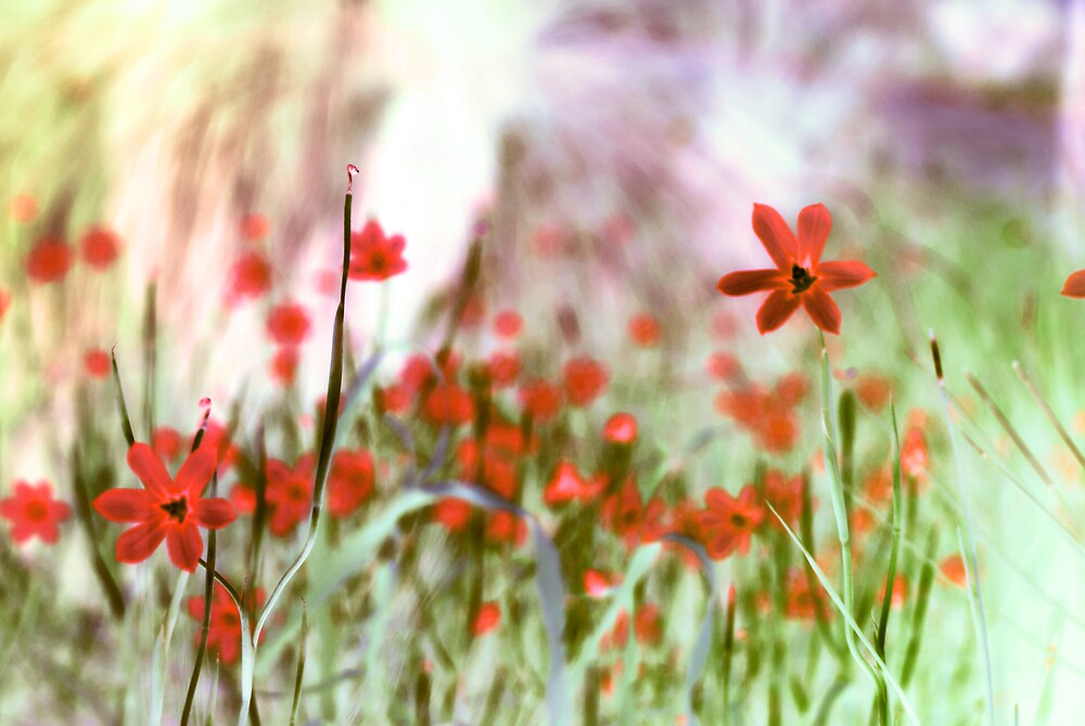 wild flowers by alistair mcbride