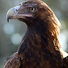 Wedgetail Eagle by Judy Harland