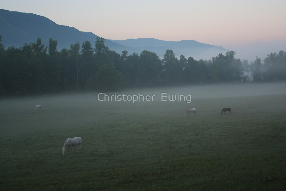 grazing under the cloud by Christopher  Ewing