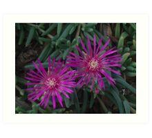 Purple Flower Fireworks Art Print