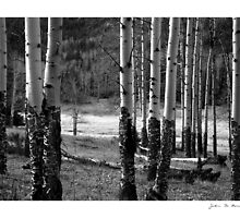 Enduring Aspens by John  De Bord Photography