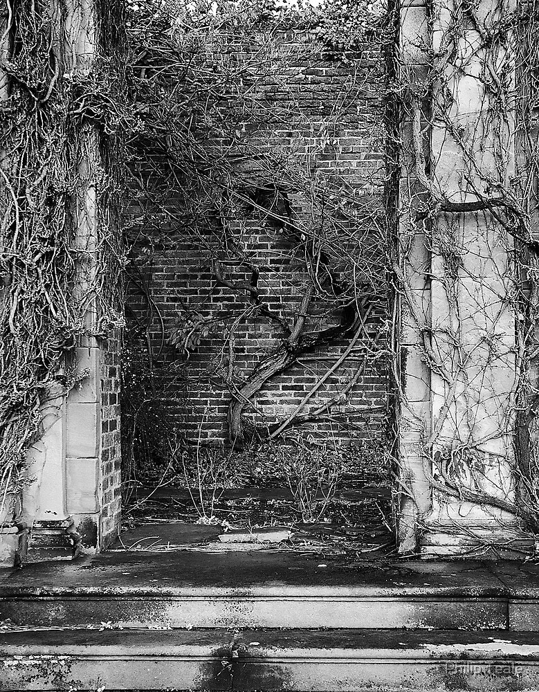 Ivy covered wall by Philip Teale