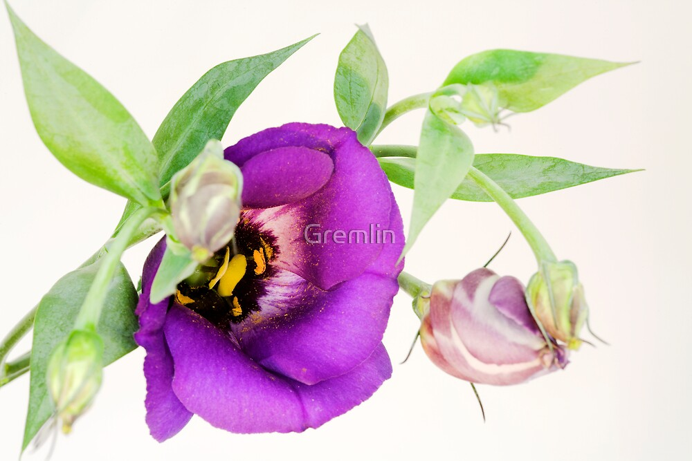 flower by Claudia Reitmeier