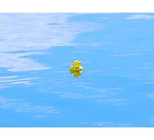 Lone duck Photographic Print