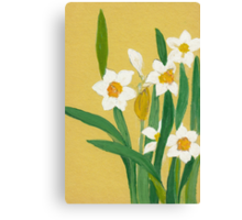 Daffodils from Amphai Canvas Print