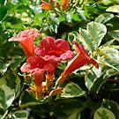 Hummingbird vine by Wieslaw Jan Syposz