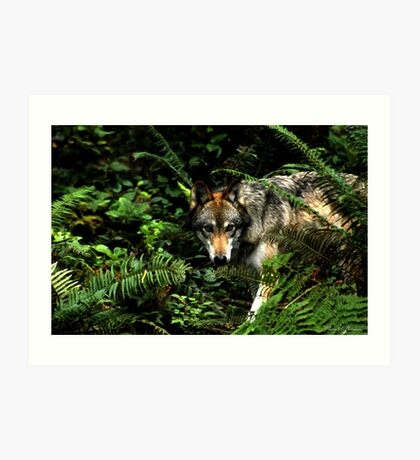 Forest Wolf (Canis lupus) Art Print