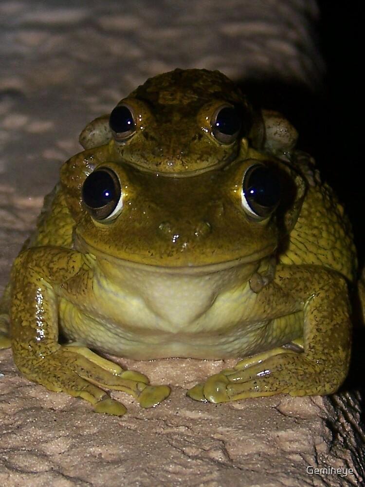 Leap Frog by Gemineye