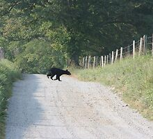 bear crossing by Christopher  Ewing
