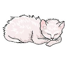 Cat Sleeping Photographic Print
