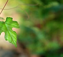 Wild Vine Leaf by Bonnie T.  Barry
