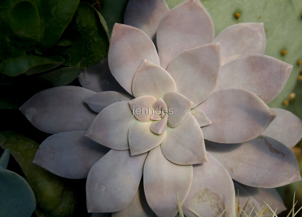 Succulent by jenndes