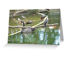 Black swan & friends Greeting Card