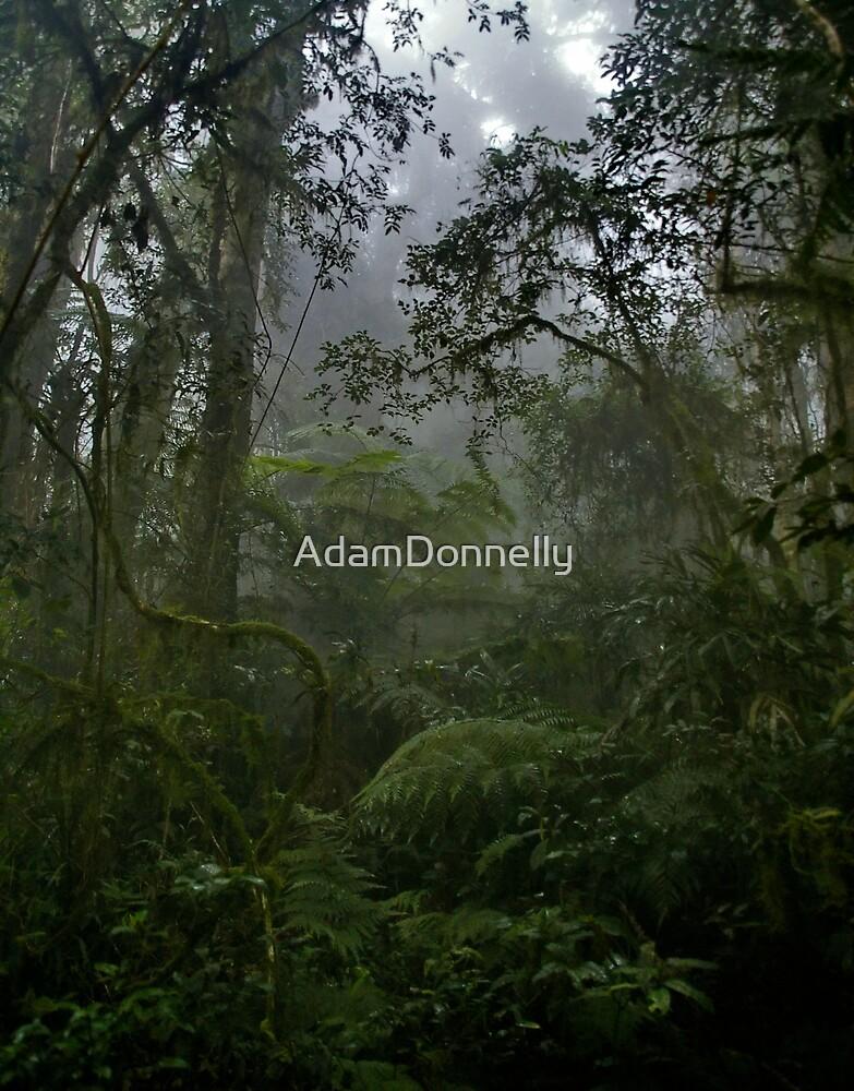 Bar Mountain Rainforest by AdamDonnelly