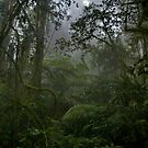 Bar Mountain Rainforest by AdamDonnelly