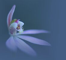 WILD ORCHID by hugo