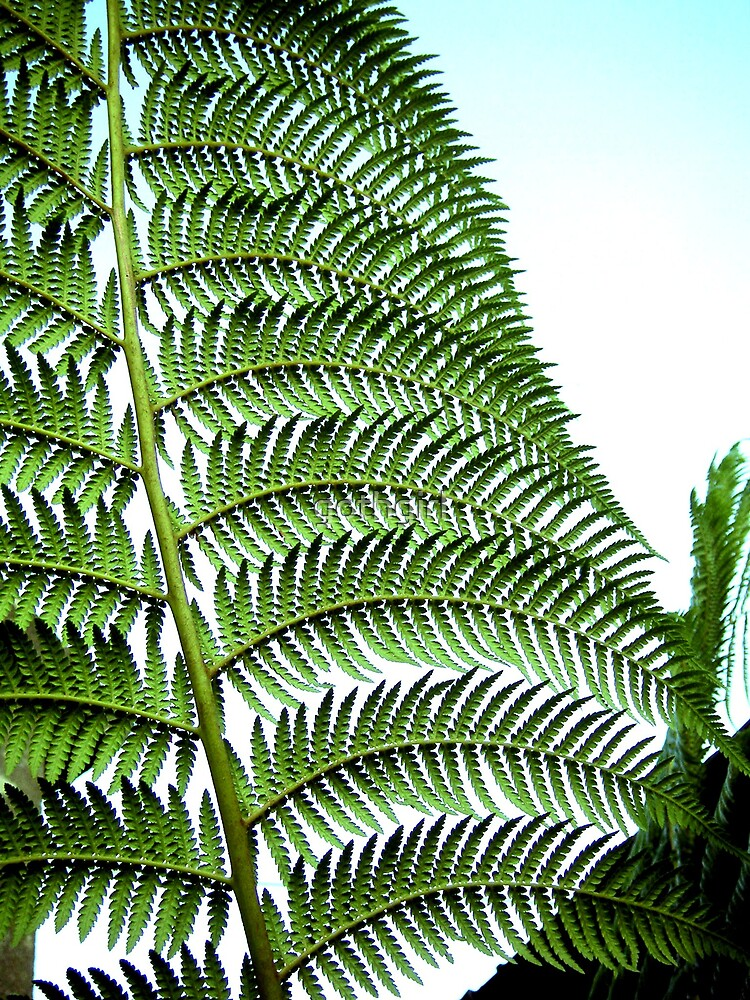 Large fern leaf by gothgirl