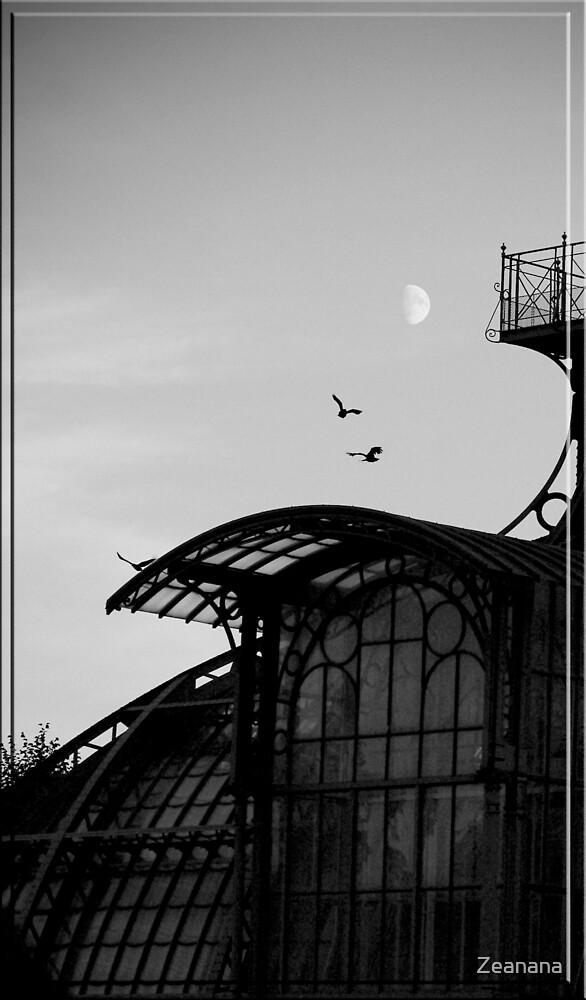 Birds over Vienna by Zeanana