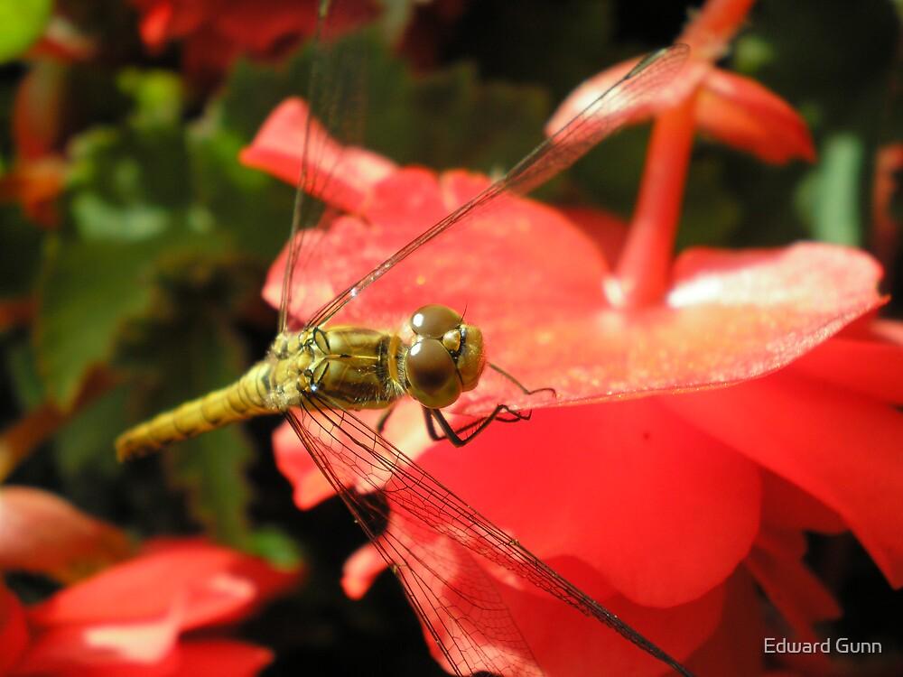 Buzz Off! by Edward Gunn