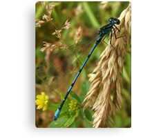 Common Blue Damsel Fly Canvas Print