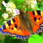 Tortoiseshell Butterfly by Pauline Jones